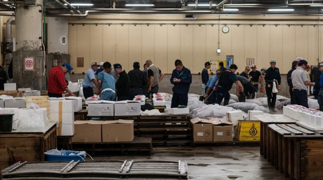 Image of Interesting Facts about Tokyo For Kids Buy Fresh Tuna at Tsukiji Fish Market Pictures