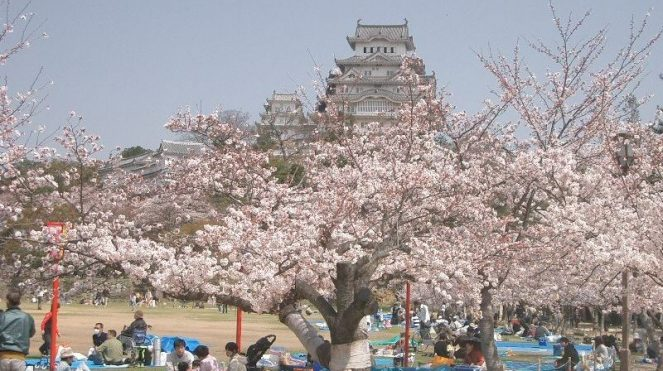 Image of Interesting Facts about Tokyo For Kids Cherry Blossom festivals Pictures