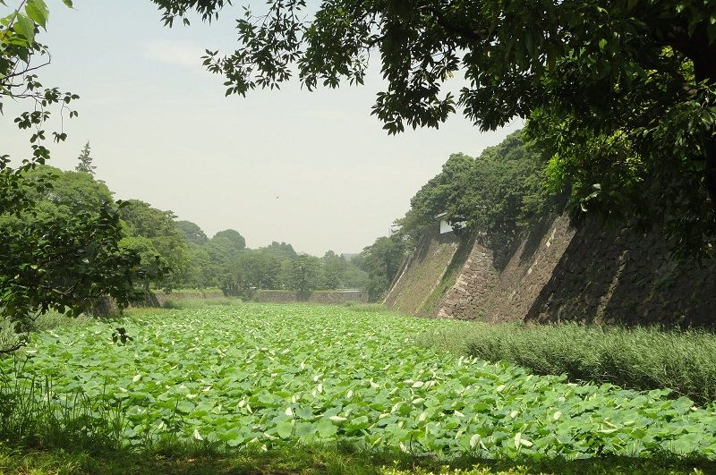 Photo Image of Things You Must Know Before Go To Imperial Palace Tokyo - Lotus Moat Spot Pictures
