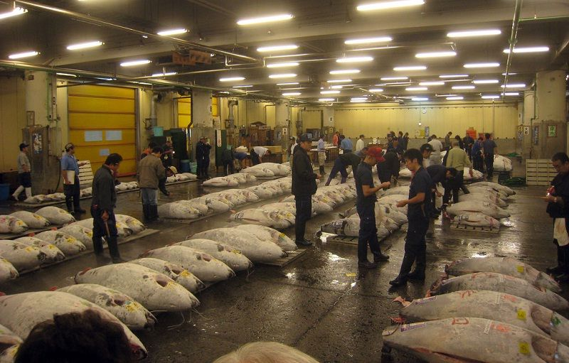 Images Photos For Japan's Fish Market Tsukiji - Tuna Auction PIctures