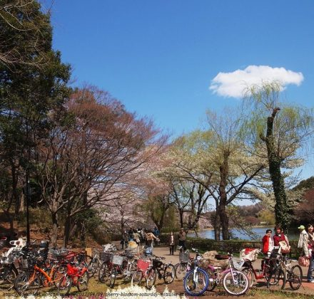 Image Photo of 10 Things You Have To Do In Tokyo - Yoyogi Park Cherry Blossom View on March Pictures