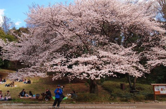 Image Picture of 10 Things You Have To Do In Tokyo - Yoyogi Park Rest Area Photos