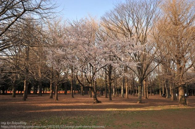 Image Photo of 10 Things You Have To Do In Tokyo - Yoyogi Park View Pictures