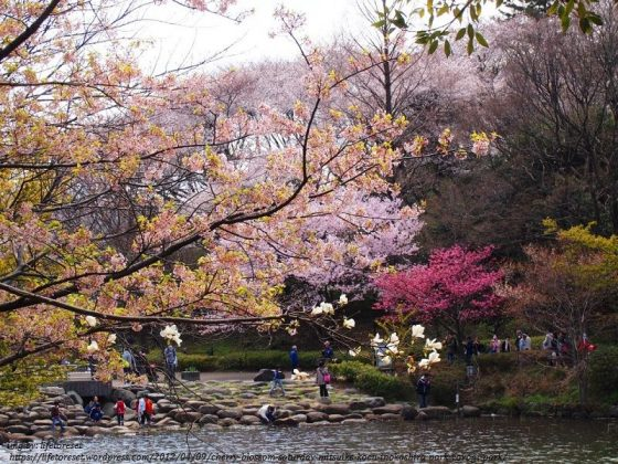 Image Photo of 10 Things You Have To Do In Tokyo - Yoyogi Park with Pool Pictures