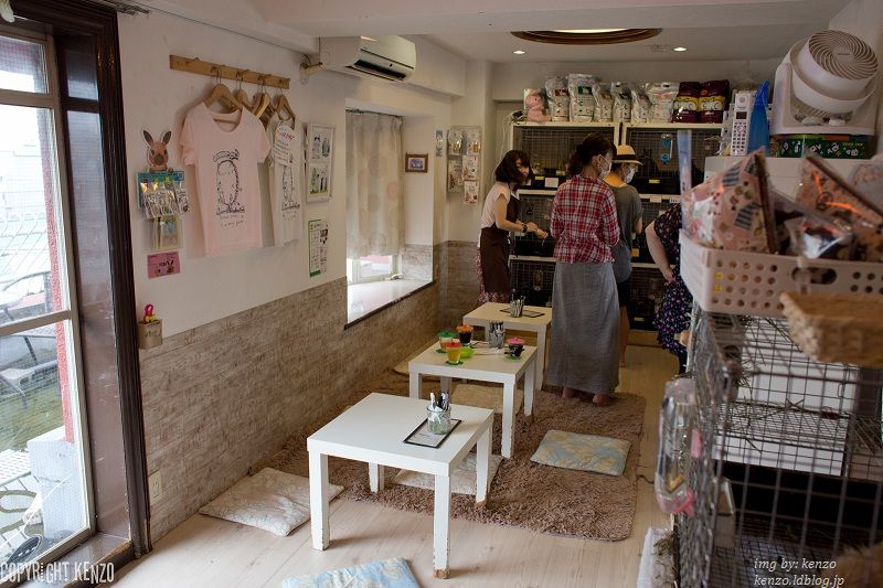 Image Photo of How to Spend 3 Days in Tokyo - R.a.g.f Rabbit Cafe Pictures