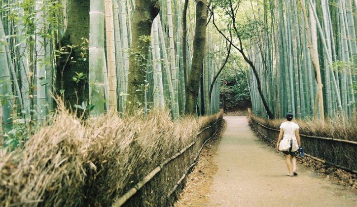 Image Photo of which cities to visit in japan bamboo grove kyoto Pictures