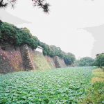Photo Image of Things You Must Know Before Go To Imperial Palace Tokyo - Lotus Moat Pictures