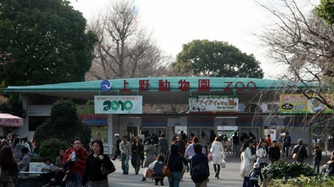 Image of Things to Do In Tokyo with Kids See Animal at Ueno Zoo Photos