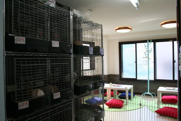 Image Photo of How to Spend 3 Days in Tokyo - R.a.g.f Rabbit Café inside Athmospher Pictures