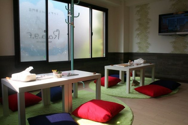 Image Photo of How to Spend 3 Days in Tokyo - Rest on R.a.g.f Rabbit Café Pictures