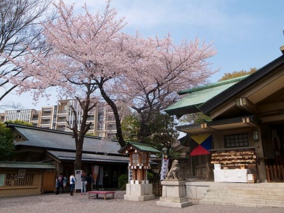 Image Photo of What To See In Harajuku - Cherry Blossom at Togo Shrine Pictures