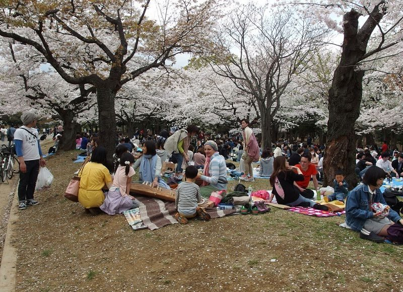 Image Photo of What To See In Harajuku - Cherry Blossom at Yoyogi Park Pictures