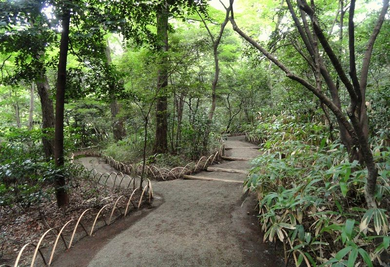 Image Photo of What To See In Harajuku - Meiji Shrine Inner Garden Path Pictures
