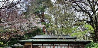 Image Pictures of What To See In Harajuku - Tea House in Royal Garden at Yoyogi Park Photos