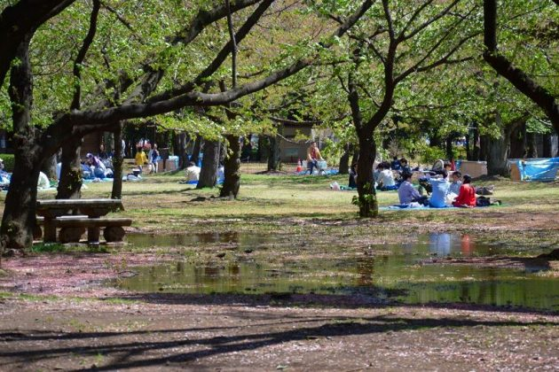 Image Picture of What To See In Harajuku - Visitors Picnic at Yoyogi Park Photo