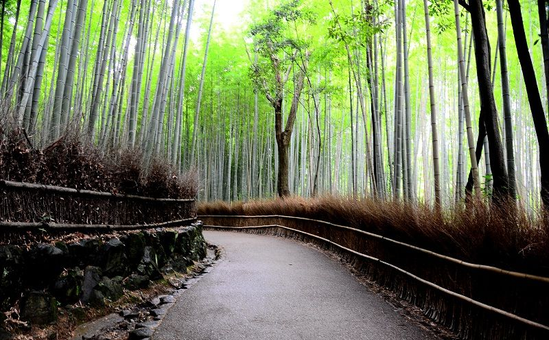 Image Photo of which cities to visit in japan arashiyama kyoto Pictures