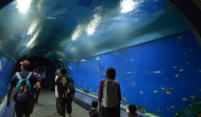 Image Photo of which cities to visit in japan kaiyukan aquarium Pictures