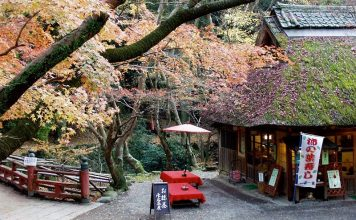 Image Photo of which cities to visit in japan nara park nara tea house nara Pictures